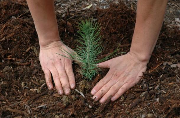Asturias con niños: Plantar arboles en el Monte Deva los sábados